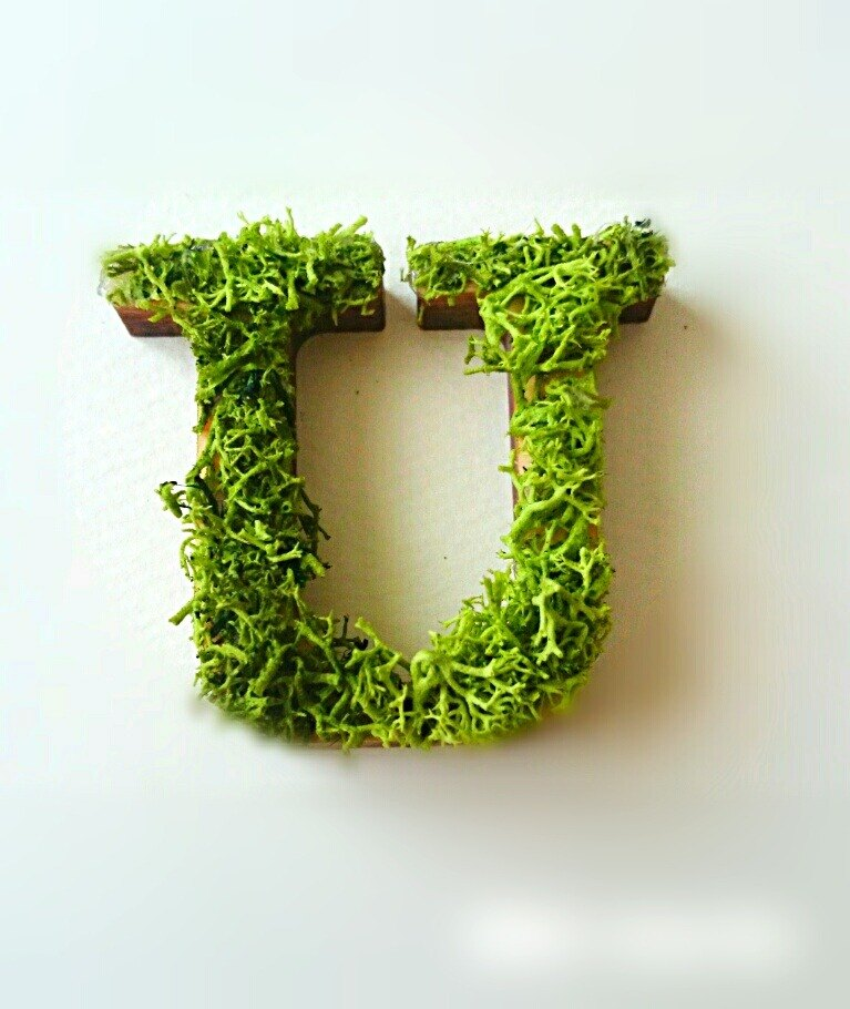 "Wooden alphabet objects (Moss) 5cm ""U"" × 1 point"