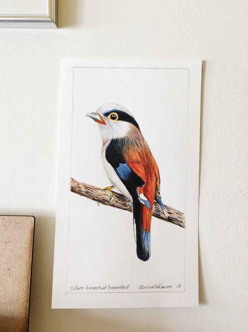 Silver-breasted Broadbill Bird Art Print