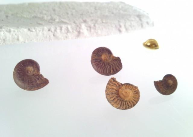 Ammonite fossil ☆ Pin badge ☆
